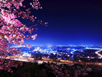 Sakura City View