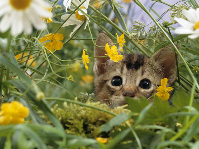 Cat Kitten Stalking